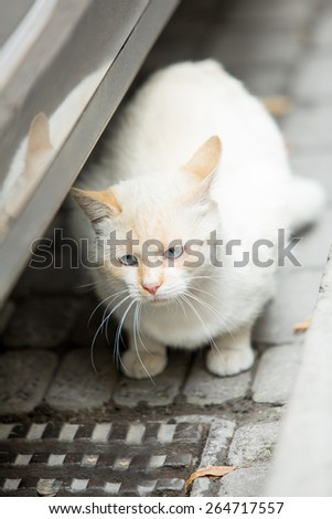 Homeless cat in the street, soft daylight