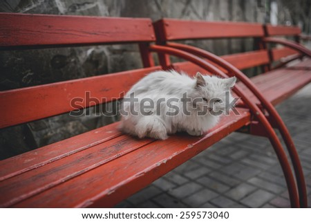 homeless cat on the bench