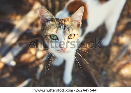 Homeless Cat Portrait on the Street. Selective Focus.  - stock photo