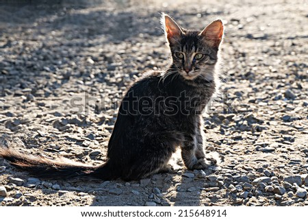 Homeless cat. Pretty Kitten sitting outdoors at sunset and looking at camera, shot with copyspace