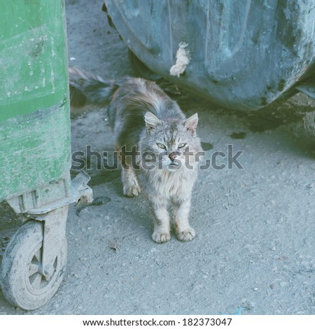 Homeless cat. The problem of stray animals in the streets