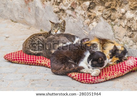 Homeless cats in Morocco - stock photo