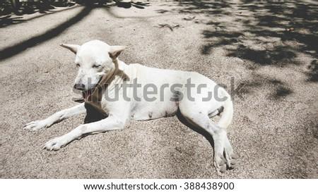 Homeless dirty dog resting on gravel floor - stock photo