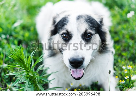 homeless dog - stock photo