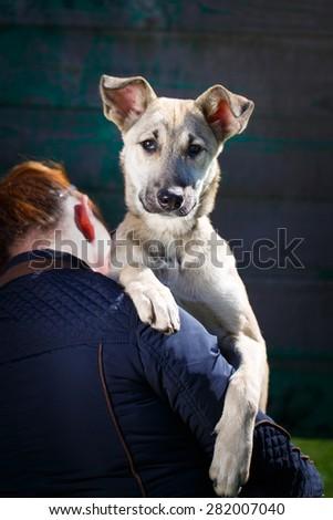 homeless dog - stock photo