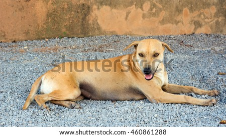homeless dog  in  temple