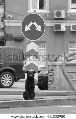 Homeless dog is waiting for someone near the road sign - stock photo