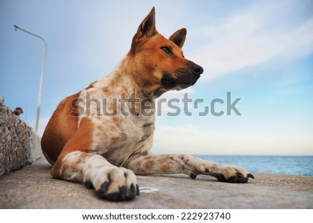 homeless dog on the fish pier - stock photo