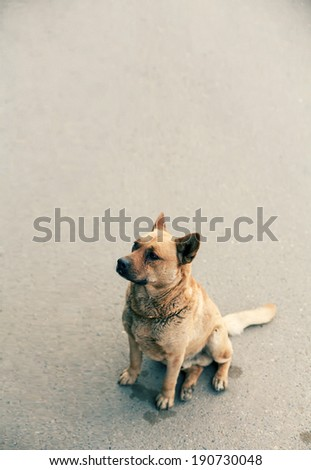 Homeless dog sitting on a road vertical image with a lot of copyspace - stock photo
