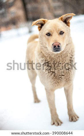 Homeless dog staying at snow street - stock photo