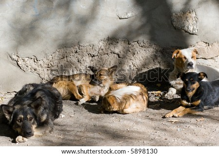 Homeless dogs - stock photo