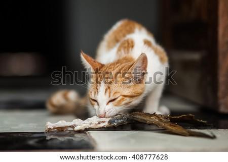 homeless kitten eating fish bone - stock photo