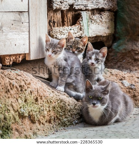 Homeless kittens with mom in Tuscany - stock photo