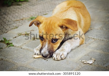 Homeless little puppy gnawing a bone outdoors - stock photo