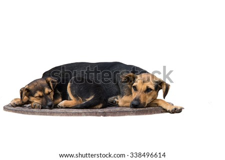 homeless puppies are sleeping on a sewer manhole - stock photo