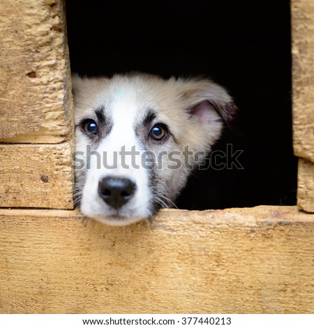 homeless puppy in a shelter for dogs