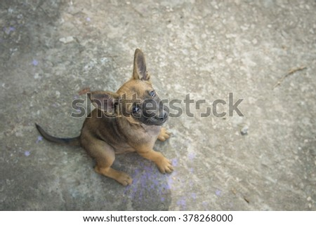 homeless puppy (selective focus) - stock photo