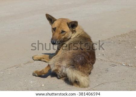 Homeless slum dog shoot outside of the city - stock photo