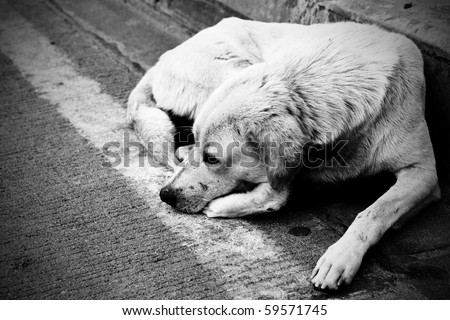 Homeless stray dog laying at urban road - stock photo