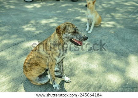 Homeless stray dog on street - stock photo