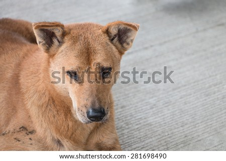 Homeless thai dog sit and look like sad on the floor - stock photo