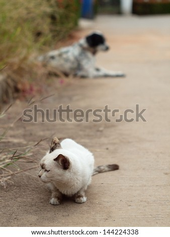 homeless white cat on pathway with a dalmatian on background - stock photo