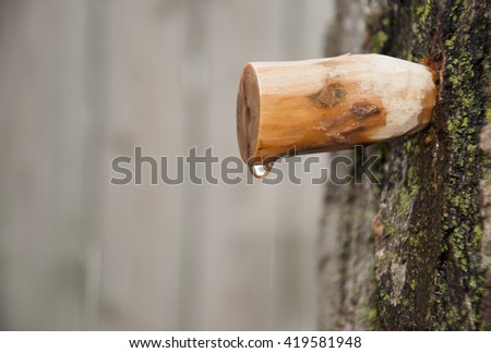 homemade carved wooden spile to tap maple tree for sap to make maple syrup - stock photo