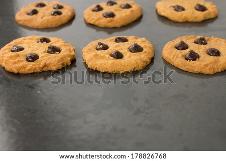homemade chocolate chip cookies on baking sheet - stock photo