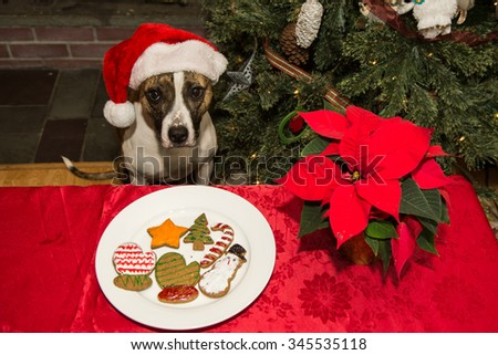 Homemade Cookies for Santa - stock photo
