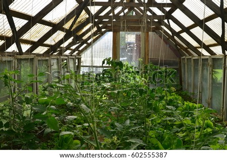 Homemade Greenhouse With Vegetable Plants (cucumber, Lettuce, Tomato. Etc)