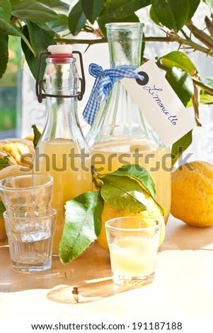 Homemade limoncello made from ripe organic lemons - stock photo