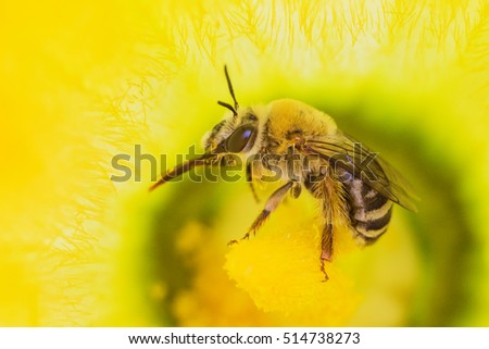 Honey Bee full of pollen