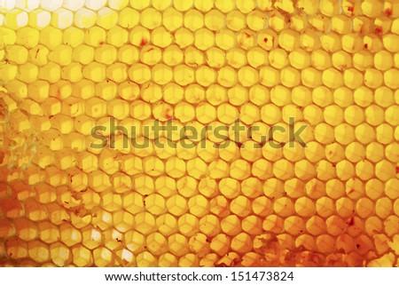 Honey bee honeycomb - stock photo