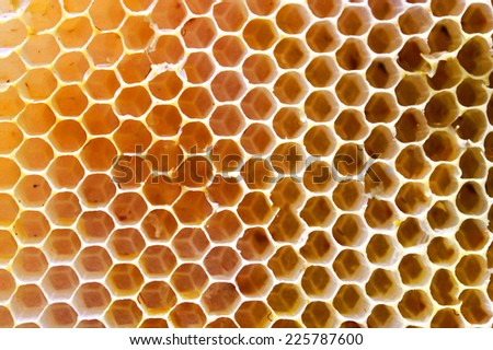 Honey beehive - stock photo