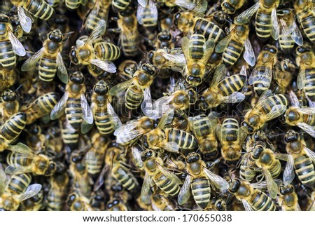 honey bees - stock photo