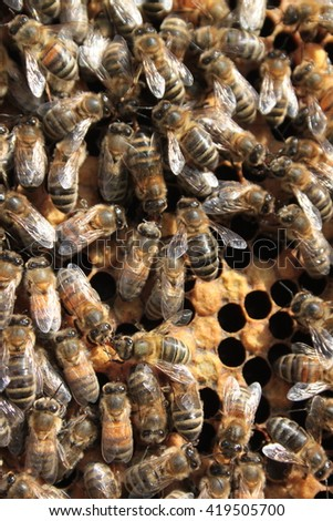 Honey Bees in hive - stock photo