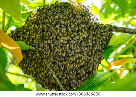 honey bees nest - stock photo
