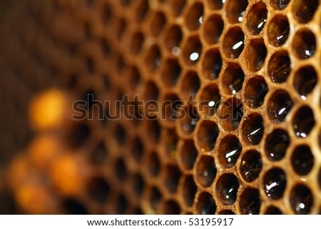 honey close-up - stock photo