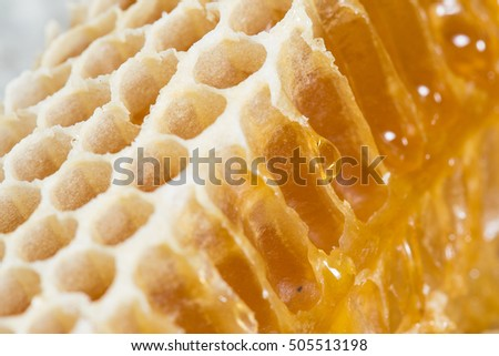 honey comb closeup