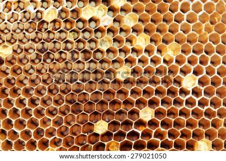 honey comb texture - stock photo