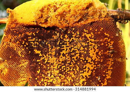 Honey from the hive making in honeycombs - stock photo
