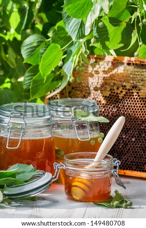 Honey in a jar and Honeycomb and linden tree - stock photo