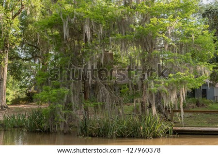 Honey Island Swamp Tour With Water and Tree in New Orleans, Louisiana