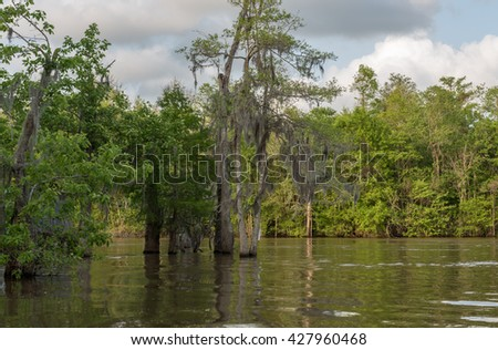 Honey Island Swamp Tour With Water and Tree in New Orleans, Louisiana - stock photo