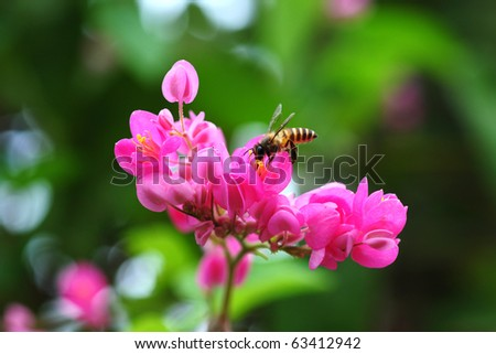 Honeybee Collecting Pollen from Flower - stock photo