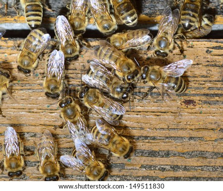 Honeybee come into hive. - stock photo