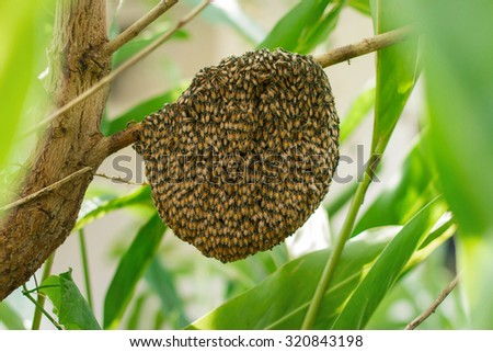 Honeybee swarm hanging at the tree in nature. - stock photo