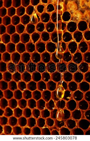 Honeycomb background - stock photo