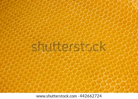 honeycomb beekeeping