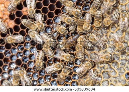 Honeycomb, bees, Honey in sealed and not sealed his cell and pollen - closeup